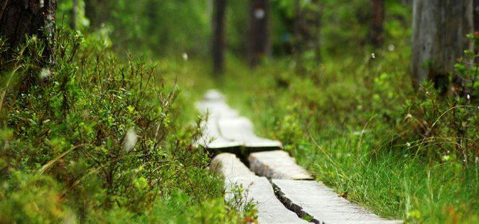 SAMK kuntoututksenohajus kuvitusPitkospolku kuva Merja Sallinen