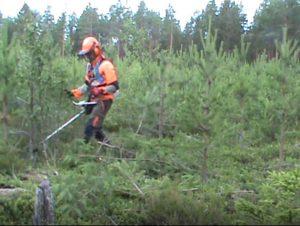 Mies metsätöissä
