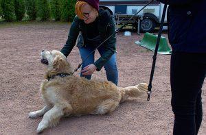 TUKEE!-hankkeen osallistuja silittää maassa makaavaa koiraa.
