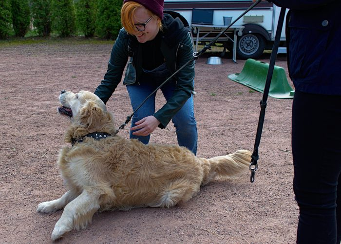 TUKEE!-hankkeen osallistuja silittää maassa makaavaa koiraa