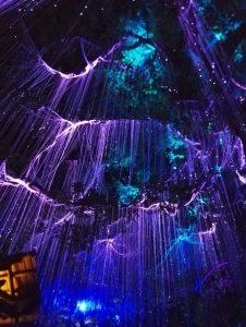 Penangin saarella sijaitseva Avatar puisto hehkuu sinisen, turkoosin ja lilan sävyissä.