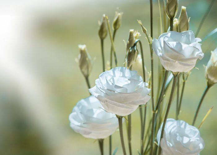 Valkoisia kukkia/White flowers