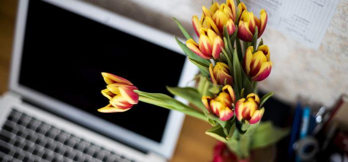 Etualalla kukkia, taka-alalla kannettava tietokone/Flowers in the foreground, laptop in the background.